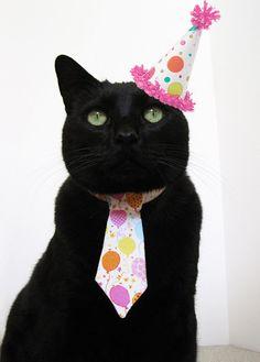 zwartekat-19jaar